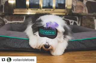"Treat your #pooch to a luxury #snooze 🐶💤☺️. Introducing, our new #dogbed ! We've sourced the highest quality materials to make sure our beloved pups get the comfy #sleep they deserve 💕. In celebration of the #launch , take 10% off a #dogbed with #promocode VOILAVIOLET.  Meet @voilavioletoes , the newest addition to the Sleep Envie family 🐾. She is the first to try out our bed! Check out her interview to find out what she thinks and learn more about Violet [link in bio]. #dogstagram #dogproducts #sleepypuppy #welovedogs #morethanamattress #getsleepenvie  #Repost @voilavioletoes (@get_repost) ・・・ Now that Charlie has moved in, it's time for me to move ON and in style. I'm the new ambassador for SLEEP ENVIE dog beds! (SUCK IT CHARLES). From now until August 1st 2017, use the promo code VOILAVIOLET and get 10% off your purchase (""dog"" or ""human"" beds). A Canadian company that ships within Canada & to the US. See link in bio for details. @sleepenvie #ad #paid #sleepenvie #oldenglishsheepdog #oldenglishsheepdogpuppy #oldenglishsheepdogsofinstagram #oes #puppylove #instadog  #petstagram #instapet"