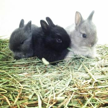 food supplies rabbits guinea pigs hamsters other small animals