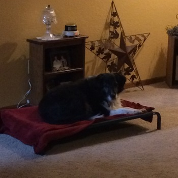 pupcool elevated dog bed elevated dog beds - Elevated Dog Beds