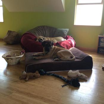 Bullybeds Com Extra Large Dog Beds