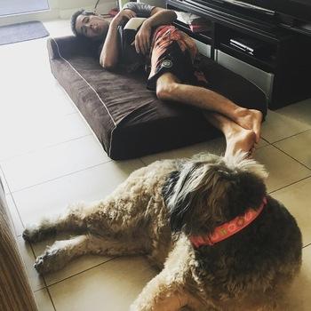 bully bed orthopedic washable u0026amp waterproof big dog beds bouvier des flanders