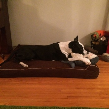 bully bed orthopedic washable u0026amp waterproof big dog beds where monsters sleep
