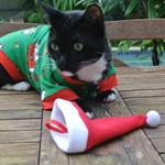 on charlie brown christmas cat pajamas