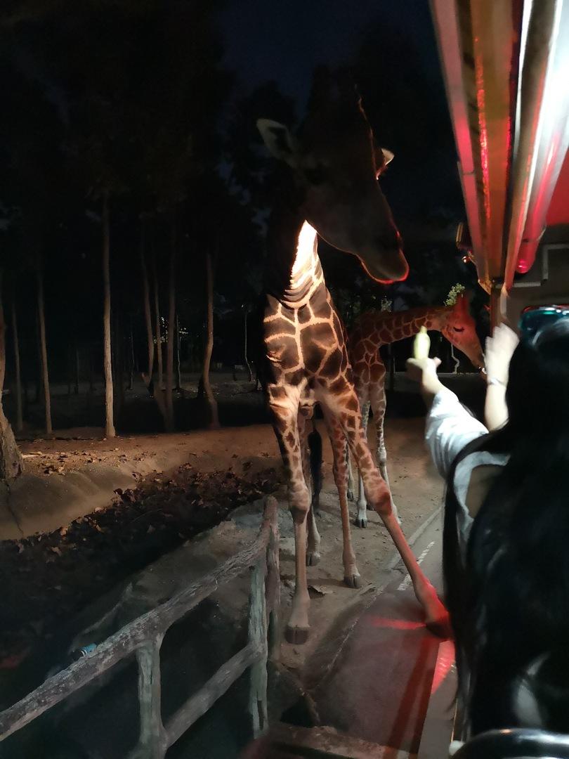 約三時間くらいのツアーでしたがキリンや鹿は触れることができるくらい近くで見ることができます タイガーショウもとてもよかったです