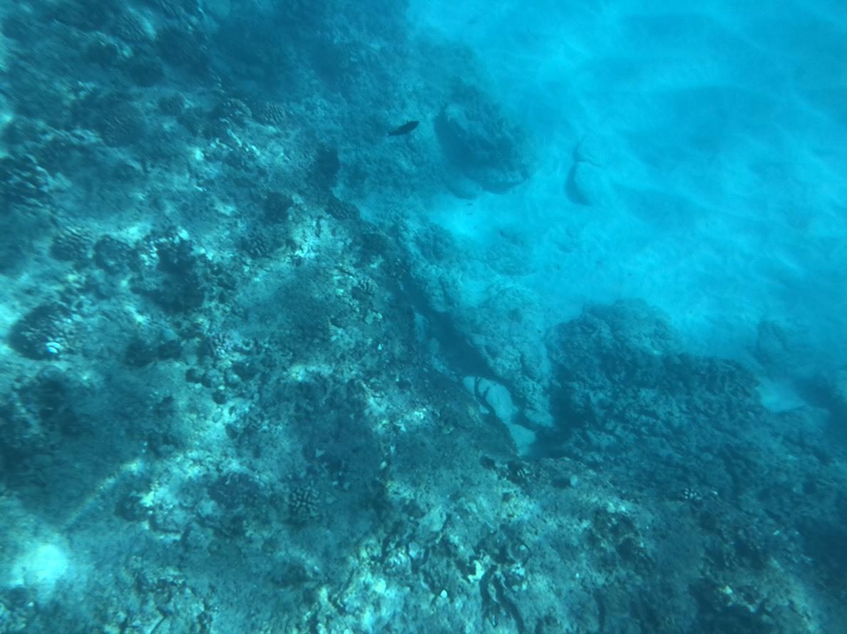 久しぶりに泳ぐこと、船酔いが心配でしたが、そんな不安はすぐ吹っ飛びました。 当日は晴天で朝日も神々しく、海が大変澄んでおり、かなり興奮!とても綺麗でした。  また野生のイルカ先生を目の前にすると、すごい!!としか言えず、ただただ感動。 ウミガメにもかなり間近で見ることが出来て、こんな経験なかなか出来ないと思いました。  すごくサポートしてくださったスタッフの皆さんには感謝です!