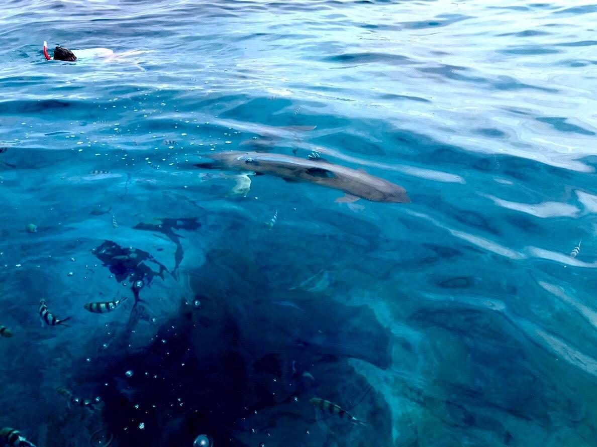 30m以上もの海面下まで透明な海にリーフシャークが何匹も泳ぎ回っている中をシュノーケリングできたのは最高でした。 透明度はタヒチのボラボラ島と同じレベルで、凄く透き通っていました。 また、訪れたいです。