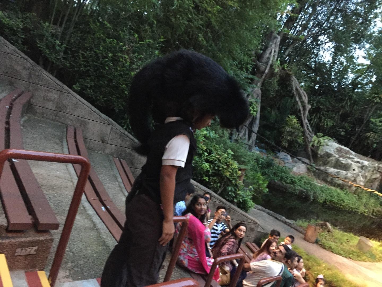 初シンガポール旅行で良い評判のだったので 行こうと決めてましたが、評判通りとても良かったです。 トラムに乗って園内を移動するのですが 日本語音声にも簡単に切り替えられ快適でした。 暑いシンガポールなので、夜のサファリは動物も人も動きが軽く思えました。 自然な状態に近いサファリなので森の中へ入って行き見れなかった動物も数種類いて残念でした。