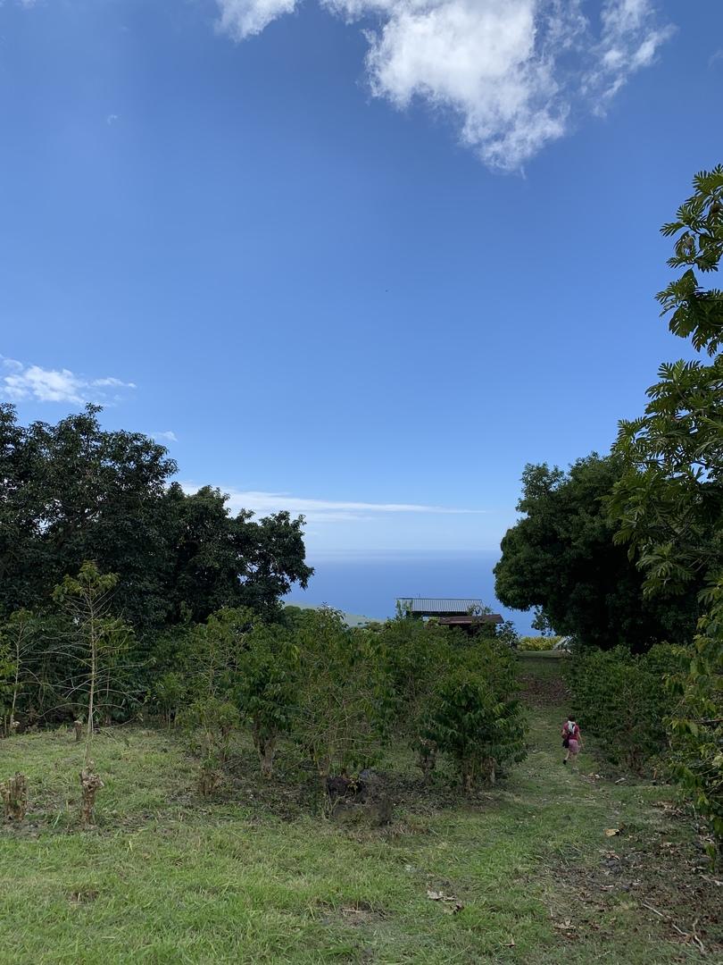 日系人の昔からのハワイでの暮らし、知恵がわかり、とても勉強になりました!コーヒー農園でも日系人の知恵がたくさん生かされていて感動しました。