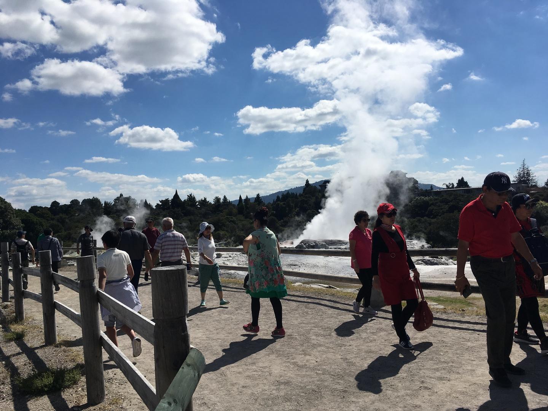 巨大な間欠泉も、珍しいキュイバードも見れて最高の1日でした!ガイドさんの段取りの良さに素晴らしいと感激しました!