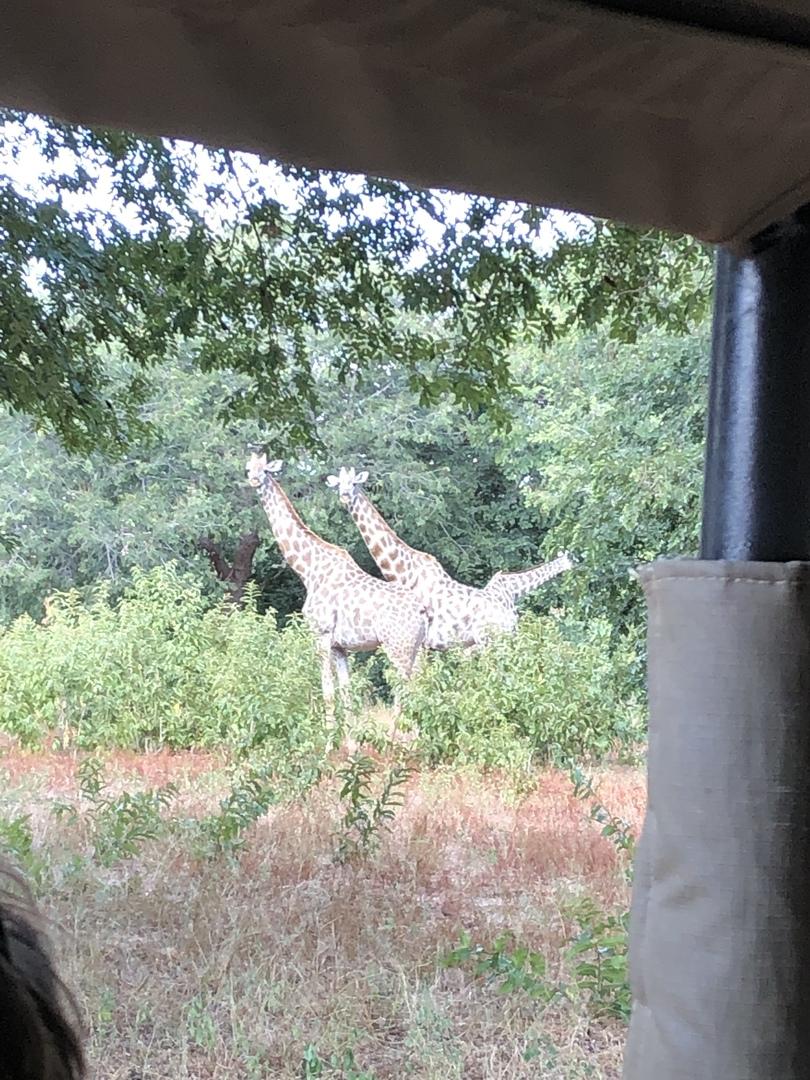 広大な湿地帯に動物たちがのんびり生活している様子を見ることができました。私が見たのは、象、バッファロー、かば、インパラ、キリン、猿、謎の巨大な魚(2メートルくらい)でした。最初が湿地帯の川側から見るリバークルーズ、ランチを挟んで湿地帯の陸側から見るサファリでした。印象としては、川のサファリの方がたくさんの動物を見る事が出来たかなという感じです。 今回は3月末でしたが、日差しが強烈に暑く、かなり体力も消耗しました。暑さ対策は必須だと思います。 私は、ザンビアのビクトリアフォールズから参加しましたが、途中のイミグレーションもスムーズで、このツアーをお願いして良かったと思いました。 ややサファリの時間が長いかな、とも思いますが、船や車のに同乗した色々な国のみなさんもフレンドリーで楽しい時間を過ごしました。 ありがとうございました。