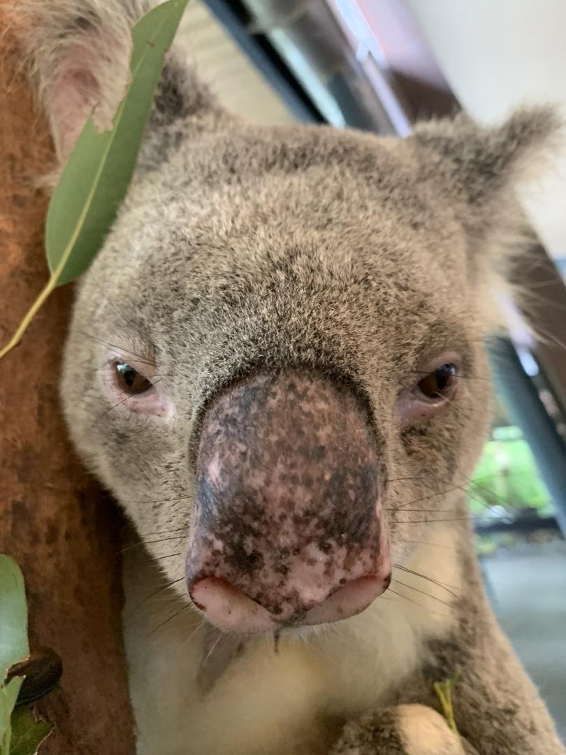 コアラが本当に近くで見て触れる事ができて、抱っこの写真とは全然違うコアラを楽しめました! ツアーの男性もとても親切で写真を たくさん撮ってくださったり、至れり尽くせりの大満足のツアーでした✨
