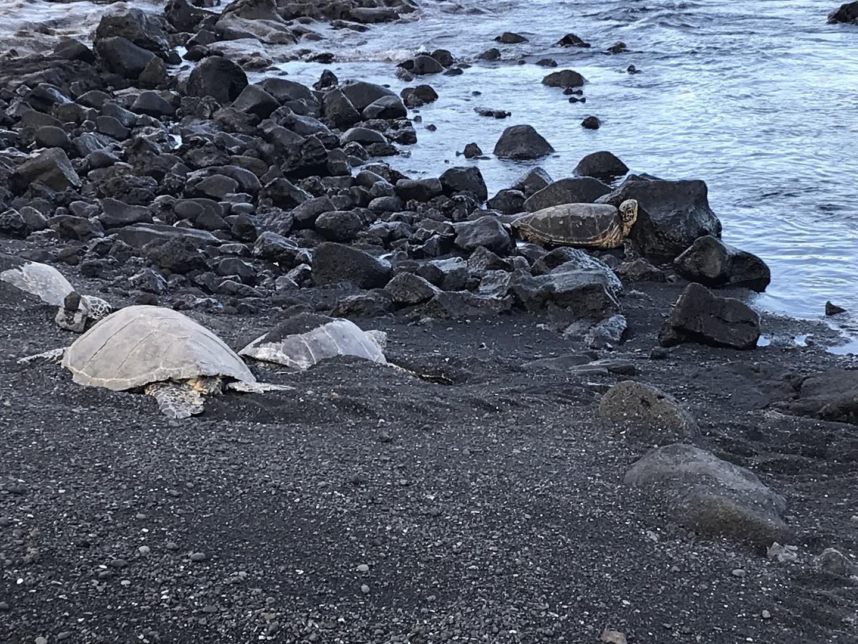 とにかく元気になれるツアーでした! ハワイ島に行ってツアーに参加したとしないでは?大きく手に入れれる心のお土産が違うでしょう^_^