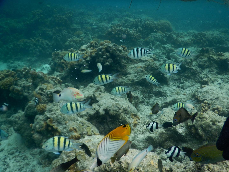 海の色、お魚の豊富さ、設備、スタッフ 全てが最高でした、また来ます!