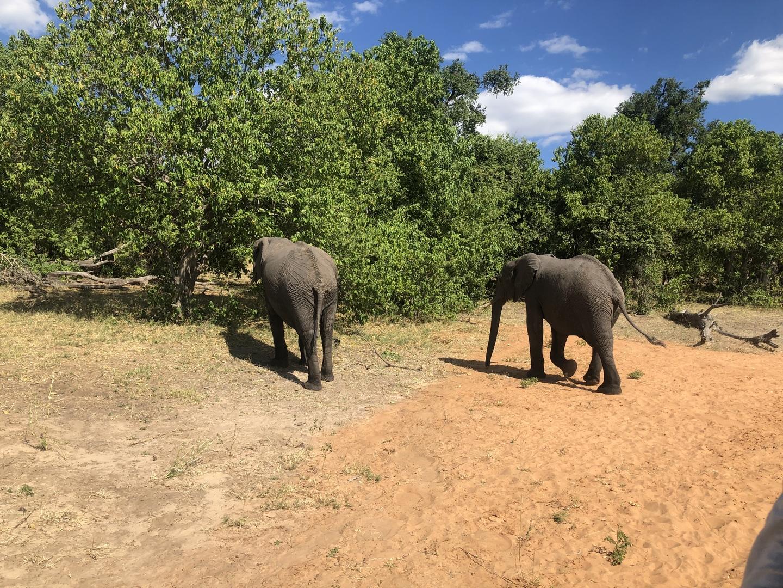 宿にはお迎えのドライバーが時間前に来て待っていてくれて、車中でもザンビアのことをいろいろ教えてくれました。 サファリは初めてだったのですがたくさんのゾウ、ワニ、カバ、インパラに会えて楽しく過ごしました。 ボートサファリとドライブサファリの間の食事も美味しかったです。