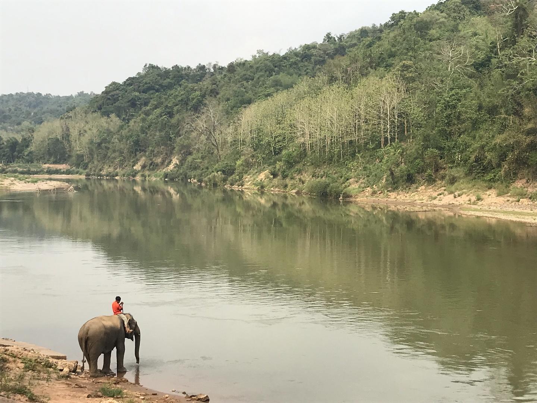 象使いになれると聞き、急遽弾丸で参加しました。 ガイドさんにラオス文化や環境、象についてなど わかりやすく解説していただき、理解を深めることができました。  象さんたちはとても優しく、賢かったです。 一緒に生活をする、象との共存ついて、学べました。 なんといっても象が可愛い。象が大好きな私は、 次は国家資格をとりにラオスに戻りたいと思います。  現地スタッフの方ありがとうございました。